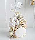 Decorative Shells and driftwood for coastal interiors